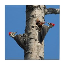 Pileated Woodpecker Family Tile Coaster