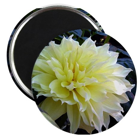 "the Yellow Dahlia 2.25"" Magnet (100 pack)"