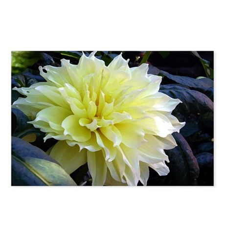the Yellow Dahlia Postcards (Package of 8)