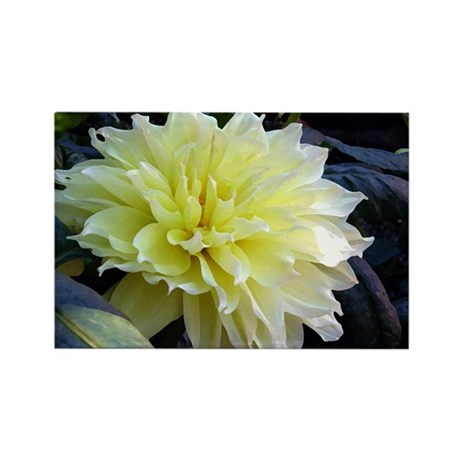 the Yellow Dahlia Rectangle Magnet (100 pack)