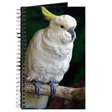 Sulphur crested Journal