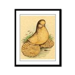 Muffed Tumbler Pigeon Framed Panel Print