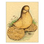 Muffed Tumbler Pigeon Small Poster