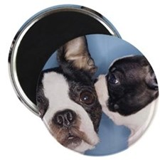 French Bulldog Secret Magnet