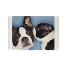 French Bulldog Secret Rectangle Magnet