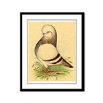 Tumbler CL Barred Pigeon Framed Panel Print