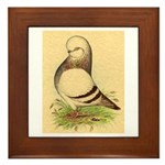 Tumbler CL Barred Pigeon Framed Tile
