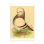 Tumbler CL Barred Pigeon Mini Poster Print