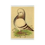 Tumbler CL Barred Pigeon Rectangle Magnet (100 pac