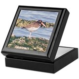 American Oyster Catcher Keepsake Box