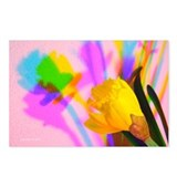 Chromatic Daffodil Shadows 222 Postcards (8)