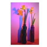 Chromatic Daffodil Shadows 29 Postcards (8)