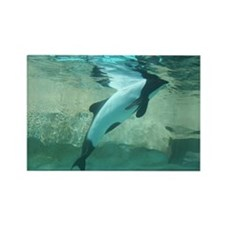 Rectangle Magnet-Dolphin