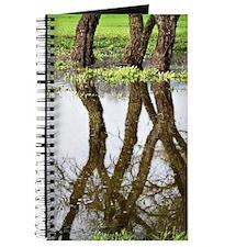 Reflecting Journal