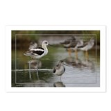 American Avocet Postcards (Package of 8)