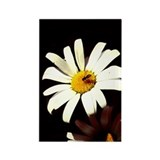 Daisy and Bee on Black Rectangle Magnet