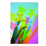 Chromatic Daffodil Shadows 230 Postcards (8)
