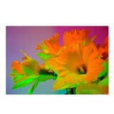 Chromatic Daffodil Shadows 62 Postcards (8)