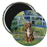 "Bridge-Aussie Shep (#5) 2.25"" Magnet (100 pack)"