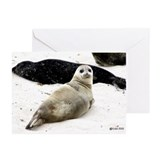 Seal Photo Greeting Cards (Pk of 10)