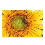Sunflower - Postcards (Package of 8)