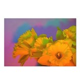 Chromatic Daffodil Shadows 300 Postcards (8)