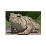 Fowler's Toad Rectangle Magnet (10 pack)