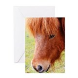 Cute Shetland pony Greeting Card