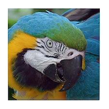 Macaw Tile Coaster