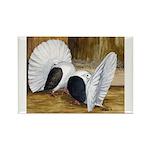 Saddle Fantails Rectangle Magnet