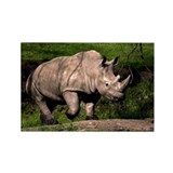 Rhino on Hill Rectangle Magnet (10 pack)