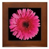 Red Gerbera Daisy Framed Tile