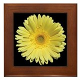 Gerbera daisy Framed Tiles