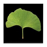 Ginkgo Leaf Tile Coaster