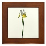 Yellow-White Iris Framed Tile