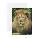 Lion - close up Greeting Cards (Pk of 10)