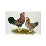Russian Orloff Chickens Rectangle Magnet (100 pack