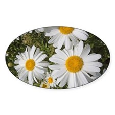 Daisies Decal