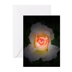 Pink Yellow Rose Greeting Cards (Pk of 20)