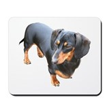 'Lily Dachshund Dog' Mousepad