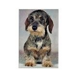 Wirehaired Dachshund Rectangle Magnet