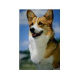 Welsh Corgi Photo Rectangle Magnet