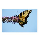 Tiger Swallowtail Postcards (Package of 8)