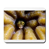 Goby in Coral Mousepad