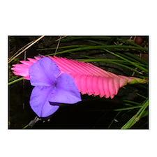 Cute Hawaii flowers Postcards (Package of 8)