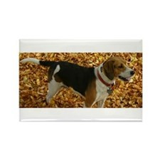 Cute Beagle pictures Rectangle Magnet (100 pack)