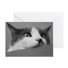 Kitty Cat Face Greeting Cards (Pk of 10)