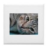 Cat tiles Drink Coasters