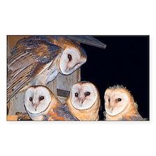 Four Owlets Sticker (Rectangle)