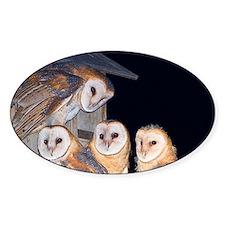 Four Owlets Sticker (Oval 50 pk)